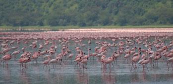 Parco Nazionale Lago Nakuru