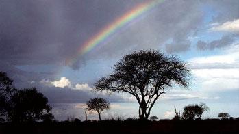 Savana del Kenya