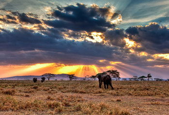 Pianura del Serengeti