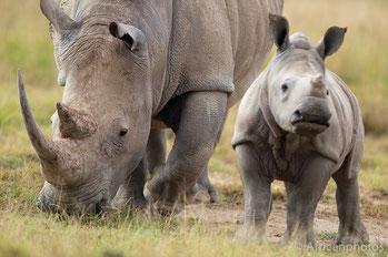 Rinoceronti - Lago Nakuru