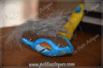 Perte de poils chez le chien : la brosse qu'il vous faut !
