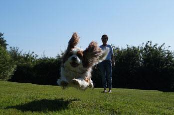 Hundepension Asmann sorgt für viel Freude
