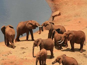 Elefanten in Tsavo Ost auf einer Kenia Safari