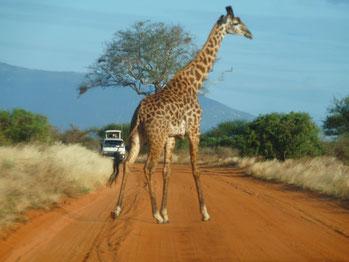 Safari in Kenia mit dem Jeep
