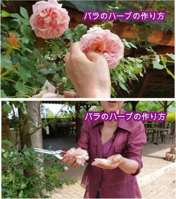 バラのハーブティーの作り方