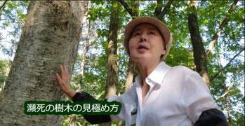 瀕死の樹木の見極め方