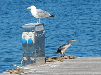 Mitsegeln Korsika Sardinien