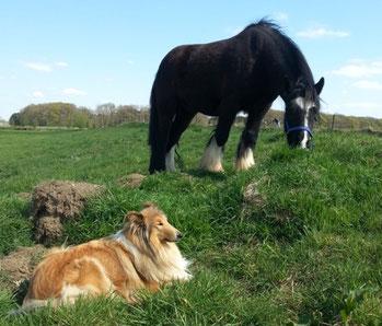 Hundepflege Pferdepflege Naturseife Seife Pflege Tierseife Öle Pottasche