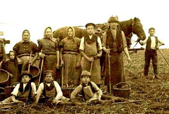 Auch Lotzdorfer Kinder waren selbstverständlich bei der Ernte voll als Arbeitskräfte eingespannt.