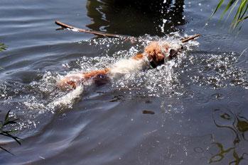 Schwimmen macht Spaß!