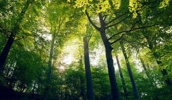 Forêt des Chambaran