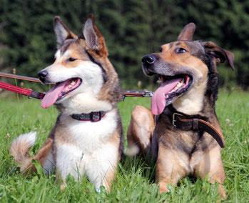 Hundefutter in Wegberg und Rath/Anhoven