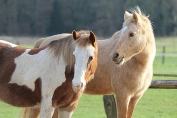 Pferdefutter und Pferdezubehör in Rath/Anhoven