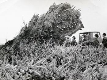 Für den Hamburger Weihnachtsbaum Großmarkt