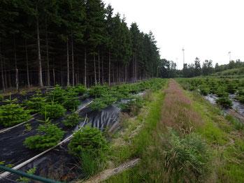 Die Fahrgassen werden im Sommer nicht gemäht.  Sie werden vom Kleingetier bevölkert.