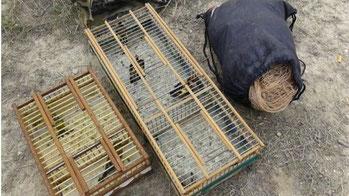 Agentes Forestales denuncian a un ciudadano por la caza ilegal de pájaros en Vicálvaro (Emergencias 112 Comunidad de Madrid)