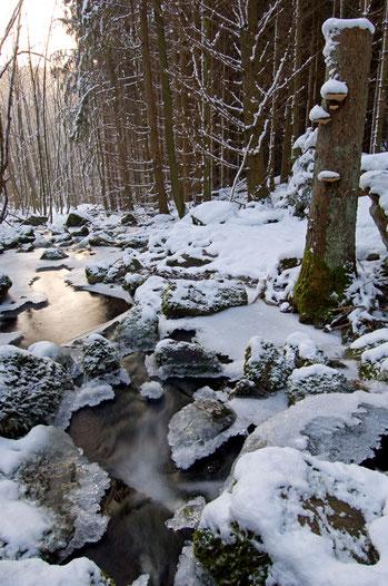 Reisenbach im Winter [UKR20110130_0149]