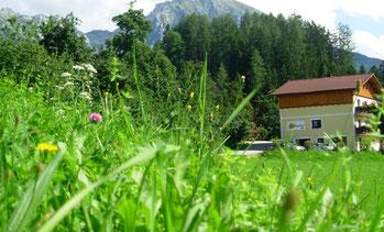 Kräuterwanderungen mit Barbara am Grüblerhof
