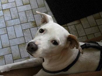 Auch Arwen sucht über die Jake Hundehilfe ein neues zu Hause.