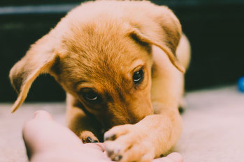 Puppy cursus Blog