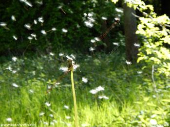Zarahzetas Lebenskunst mit Pusteblume im Wind