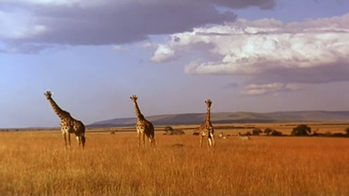 La savana africana