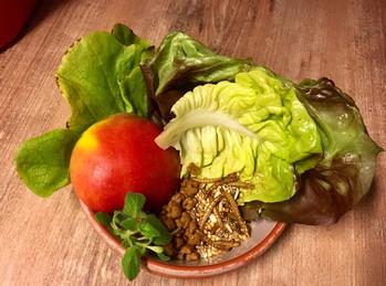 Apfel, Salat, Kräuter, Insekten, Katzenfutter und Sämereien