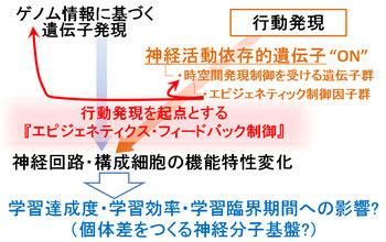 『行動発現を起点とするエピジェネティクス・フィードバック制御』(作業仮説)