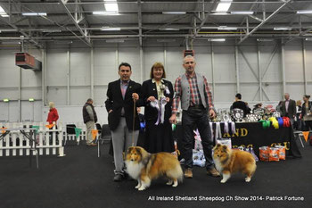 Left : Green Star Dog :  Ir  Ch, Lux Ch Irish Legend of Navarrem ( An Ch 13)- ( Mr E. Castillo & Mr P. Fortune)  Right : Reserve Green Star Dog : Degallo The Show Must Go on of Fernach- ( Mr D.McDonald)