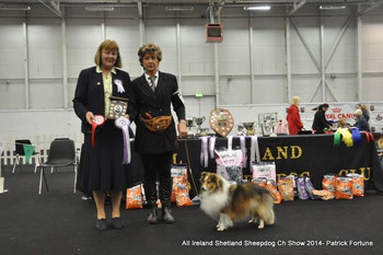 Best Veteran In Show : 2. Ir Ch Klassymar Shining Star ( Ms M. Morris)