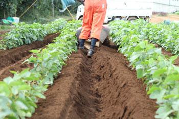 大豆の畝間を中耕機で中耕している写真