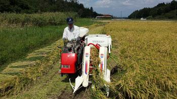 稲刈りの様子(昨年)