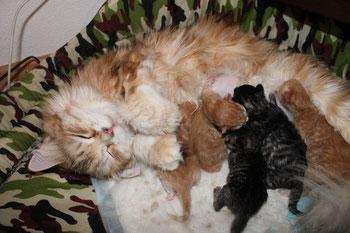 3 août 2014 - maman et bébés