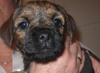 Cleo mit 8 Wochen