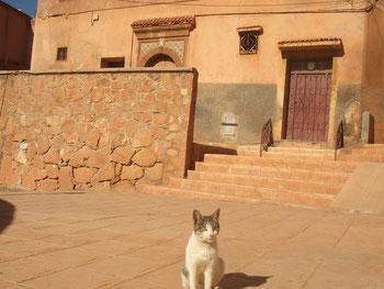 モロッコの猫です。(*^^*)