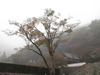 秋(11月3日)の音楽会