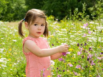 kleines Mädchen in Blumenwiese