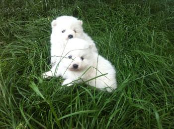Jitsuko et Juna ( à 1 mois )