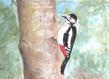 Ein Specht am Baum, er sucht, ob sich unter der Rinde leckeres Futter versteckt. Acrylbild von Claudia Pichler Salzburg