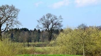 Wallhecken Landschaft Rhauderfehn