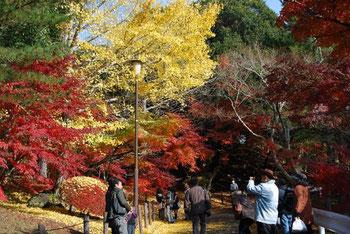 千葉県成田市,第17回 成田山公園紅葉まつり