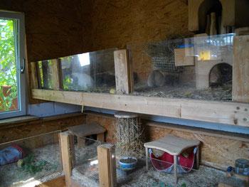 Die mittlere Etage hat auch einen kleinen Aussenbereich - hier wohnen meine alten Schweinchen