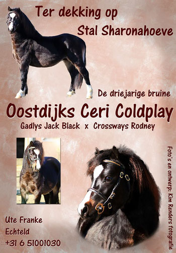 Coldplay's advert as a studstallion at Stal Sharonahoeve