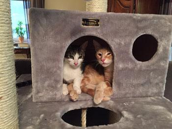 Mika und Merlin