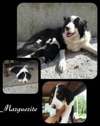 MARGUERITE adoptée en Juillet 2018