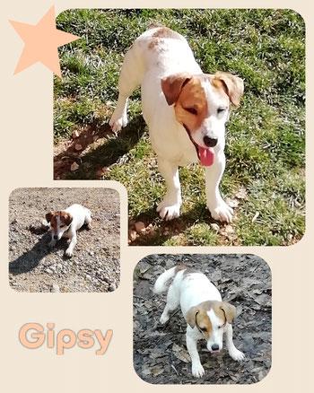 GIPSY adoptée en Mars 2019