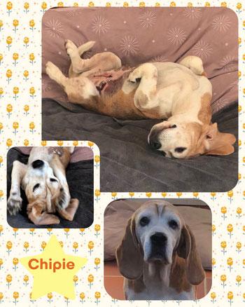 CHIPIE adoptée en Novembre 2018