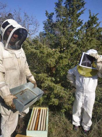 Bastien ALISE apiculteur en Cévennes