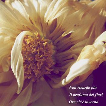 Foto di Michela Dal Magro, Haiku di Loris Giopp