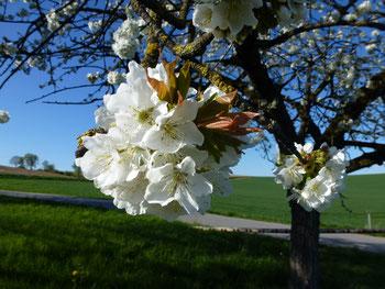 Bild Blütenzauber